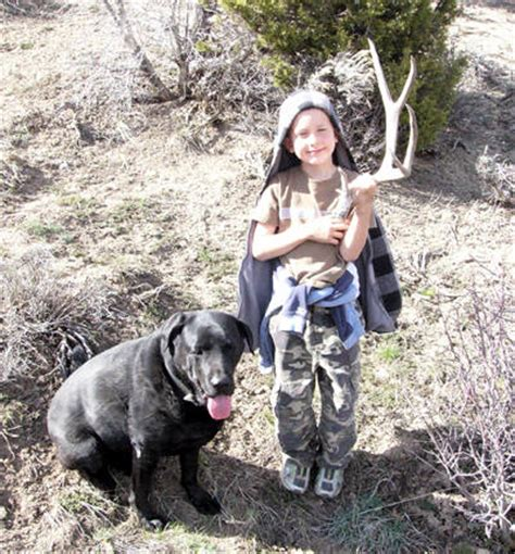 shed dogs utah shed monstermuleys