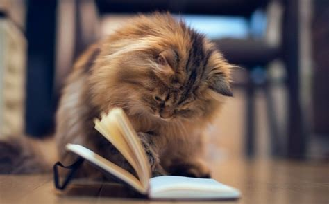 les images de chaton mignon qui vont vous donner  grand
