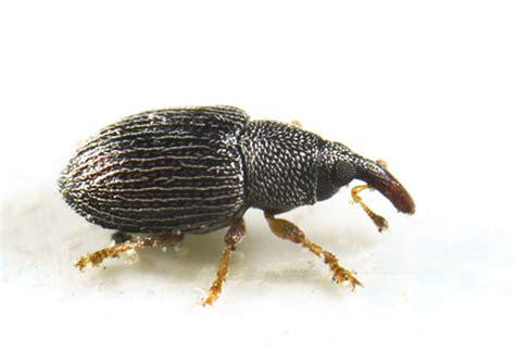 Raid® Bug Id