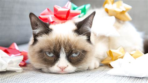 1920x1200 animated wallpaper gif download hd wallpapers. Christmas Grumpy Cat Quotes. QuotesGram