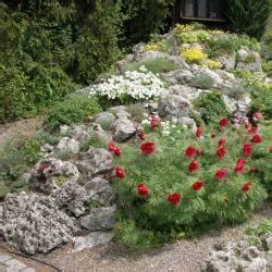 Die Schönsten Steingärten : hauswurz anspruchslose mini stauden mein sch ner garten ~ Bigdaddyawards.com Haus und Dekorationen
