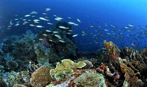 kepulauan togean empat jenis karang dunia ditemukan