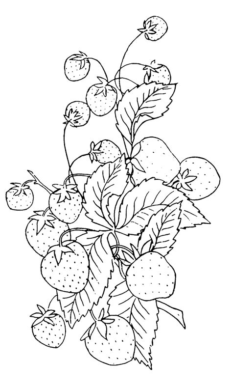 vintage clip art strawberry embroidery pattern