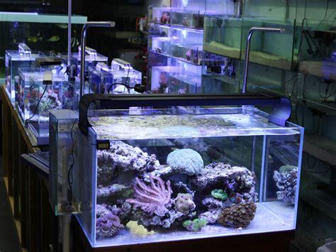 led aquarium beleuchtung nachteile 100cm aquarium abdeckung bausatz mit k 252 hlk 246 rper f 252 r 100x1w