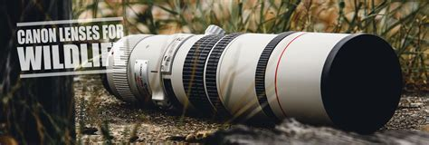 canon lenses  wildlife photography ultimate guide