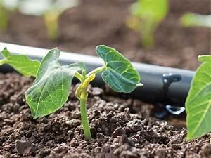 Tröpfchenbewässerung Selber Bauen : tr pfchenbew sserung irrigata howitec netting ~ Lizthompson.info Haus und Dekorationen