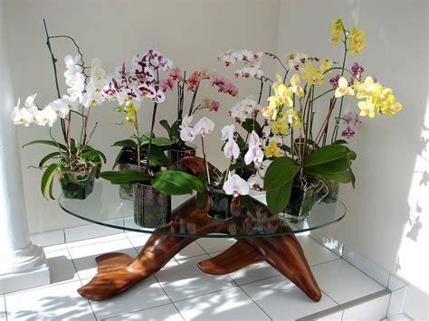 culture en pots de verre pour phalaenopsis et autres