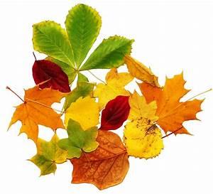 Bilder Herbst Kostenlos : bunte bl tter herbst lizenzfreie fotos bilder kostenlos herunterladen ohne anmeldung ~ Somuchworld.com Haus und Dekorationen