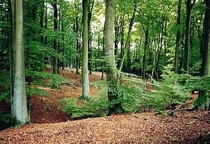 Bilder Vom Wald : wald auf dem z richberg oder flugplatz d bendorf nextz rich ~ Yasmunasinghe.com Haus und Dekorationen