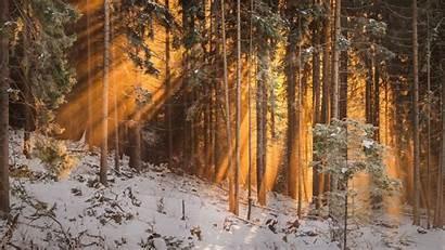 Forest Winter Trees Sunlight 1080p Background Sun