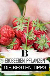 Erdbeeren Wann Pflanzen : 66 besten balkon garten bilder auf pinterest ~ Frokenaadalensverden.com Haus und Dekorationen