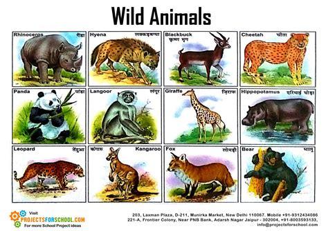 Free Photo Wild Animal Animal Floor Lizard Free