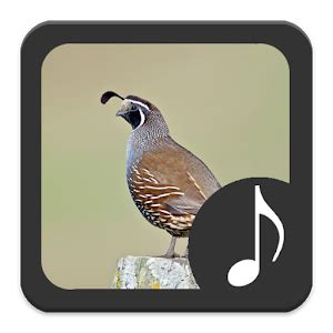 quail sounds android apps on google play
