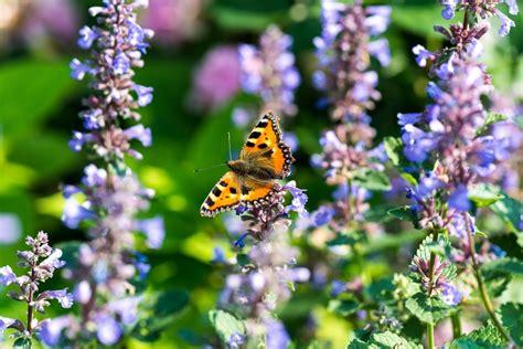 Garten Pflanzen Schmetterlinge by Schmetterlinge Im Garten Pflege Pflanzen D 252 Ngen Schnitt