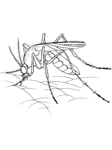 Coloring Drawing by Free Printable Mosquito Coloring Pages For