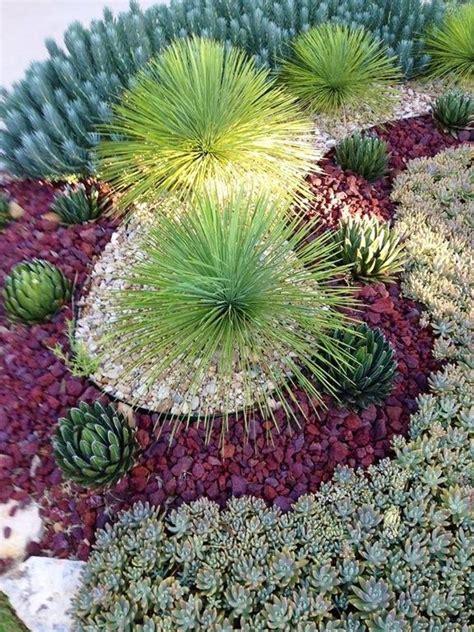 succulent landscapes rustic landscape yard with desert landscaping succulent garden elijah blue fescue festuca