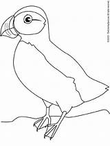 Puffin Coloring Pages Macareux Colouring Print Oiseaux Puffins Oiseau Coloriage Printables Lightupyourbrain sketch template