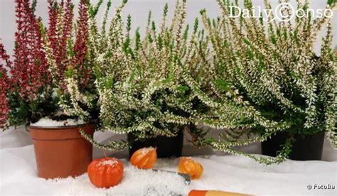 synonyme de cuisine plantes et fleurs d 39 hiver