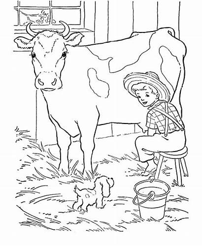 Coloring Cow Dairy Milk Pages Produce Fresh