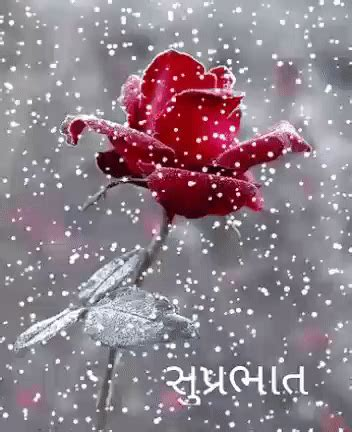 Good Morning Image 2018 Gif Imaganationfaceorg