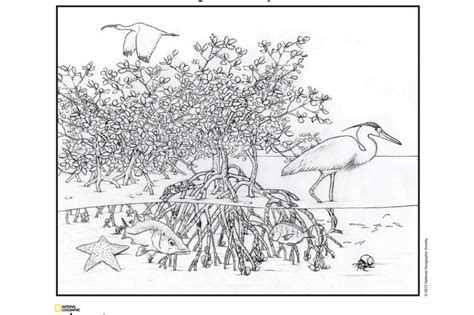 desert ecosystem coloring pages printable coloring pages