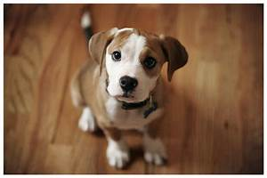 the cutest dog in the world