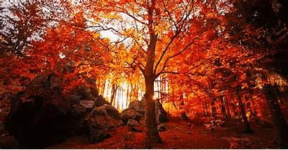 Falling Leaves Tree Nature Autumn Animated Orange