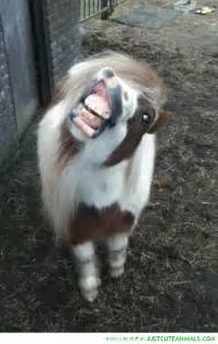 Cute Animals Smiling with Teeth