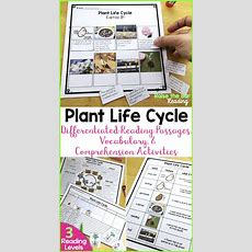 Differentiated Plant Life Cycle Reading Passage, Vocabulary & Comprehension  Common Cores