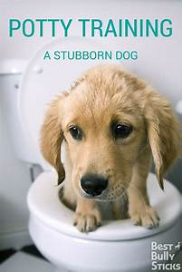 Pinterest o the worlds catalog of ideas for Dog potty training problems