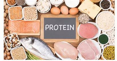 Protein Foods Rich Eggs