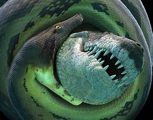 Green Anaconda Eating Crocodile | www.imgkid.com - The ...