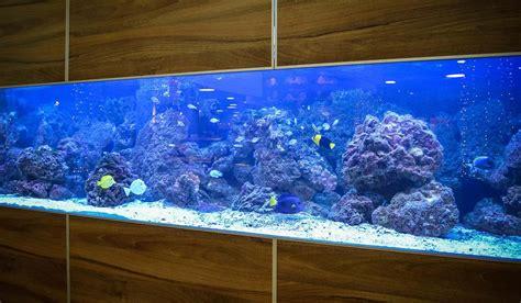 aquarium kernsanierung step by step aquariumeinrichten wie richte ich mein aquarium ein