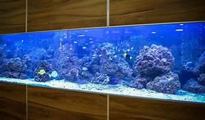 Die Besten Aquarien : aquarium kernsanierung step by step aquariumeinrichten ~ Lizthompson.info Haus und Dekorationen