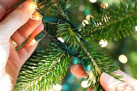 wrapping trees with christmas lights