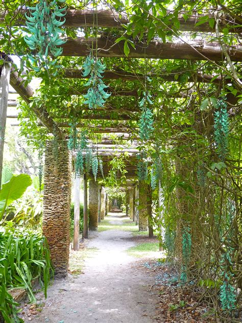 Garden Arbor Plants by Oh How I Wish We Could Grow Jade Vine Here Gorgous Plant