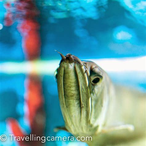 jawahar fish aquarium  mall road  mussourie