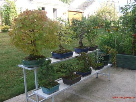 les bonsa 239 s ces petits arbres en pot sous ma gloriette