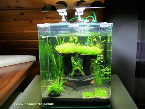 aquarium crevettes eau douce le nano aquarium d 233 finition et explications illustr 233 es