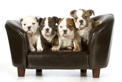canapé chien canapé pour chien prix et modèles ooreka