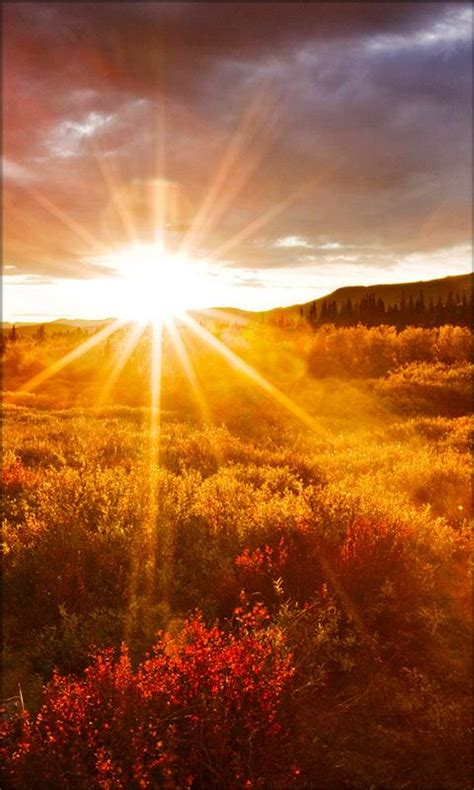 sun light l live wallpaper for android live