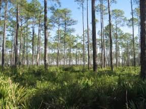 Okefenokee Swamp Georgia Map