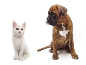 dogs and cats cats and dogs photosfine