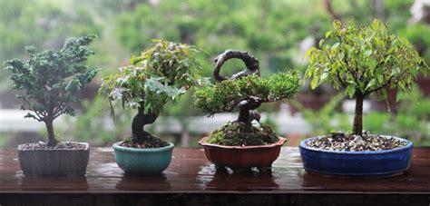 bonsai äste schneiden bonsai schneiden die 5 richtigen schritte
