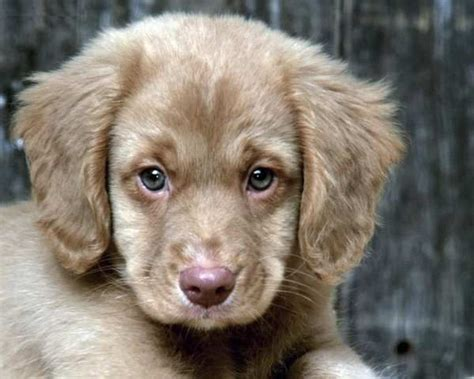 Non Hypoallergenic Dogs List by Mini Puppy Breeds Search Not Sure What Breed