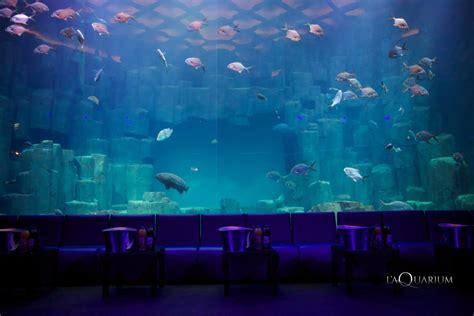 l aquarium de club l aquarium frivole