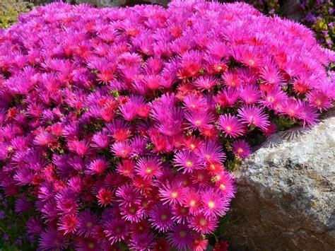 Blumen Für Sonnige Standorte blumen sonniger standort stauden f r den garten sonniger