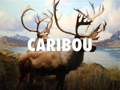 unclean clean animals caribou