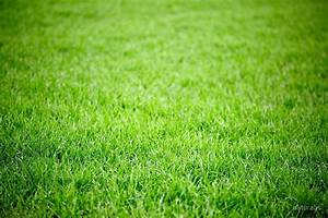 """Green grass field background"" by naturalis 