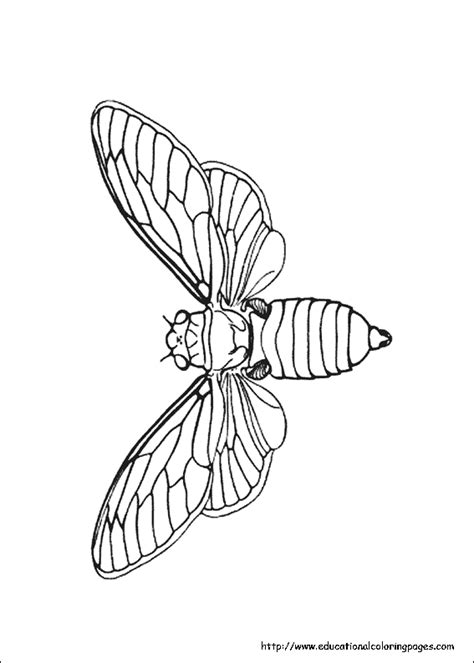 Insects Coloring Pages free For Kids